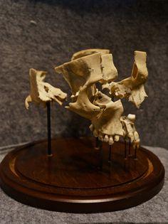 Beauchene Exploding Skull