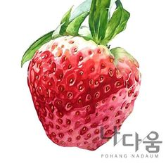딸기 Botanical Drawings, Botanical Art, Botanical Illustration, Illustration Art, Watercolor Fruit, Watercolor Paintings, Painting & Drawing, Watercolor Pencils Techniques, Food Doodles
