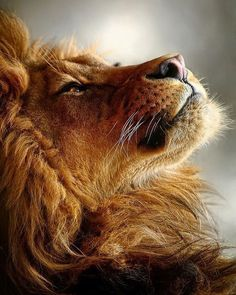 Noble King | Photo by ©Kosari #WildLives Order an oil painting of your pet now at www.petsinportrait.com