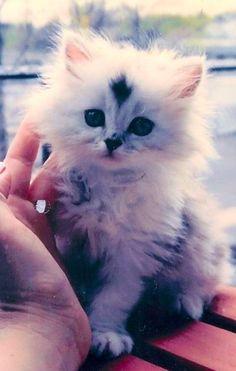 What a sweet kitten!