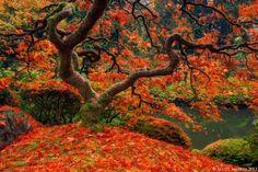 Maple Twist by Scott  Smorra on 500px