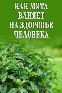 Natural Home Remedies, Herbal Remedies, Medicinal Plants, Herbal Medicine, Natural Oils, Dentistry, Herbalism, Health Care, Health Fitness