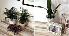 💖🎍🌷 5 ideas para decorar con plantas 💖🎍🌷 #RemaxUno #Deco #Plantasquealegrantusdias
