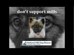 Don't support puppy mills...please take a moment to learn from National Mill Dog Rescue