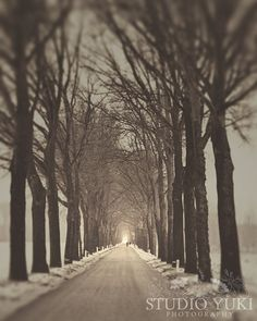 Fog Photo Landscape Black and White Trees Path  by StudioYuki, $30.00