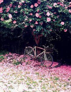 การจัดสวนไม้ดอกเป็นกำแพงรั่ว