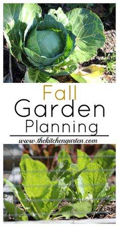 The spring/summer garden is giving up the last of its harvest, and it's time to think about the fall garden. Find out what to grow! via @cpjsouthern