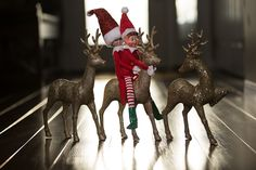 December 8  -  - http://ajenns.com/christmas/december-8/