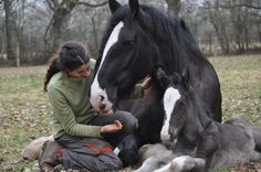 Beautiful Clydesdale Mare with Foal