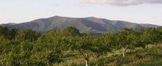 Reece Apple Orchard - pick your own apples, kid activities, petting farm - Ellijay, Ga