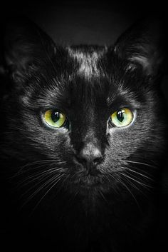 An Cat Dub (The Black Cat) | Patrick Laberge | Flickr