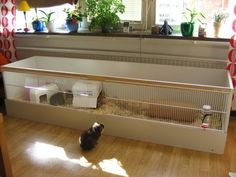 Buy The Right Size Guinea Pig Cage. Photo by maskarade Purchasing a guinea pig cage in a pet shop is unfortunately a good way to ensure that it is in fact too small for your pet's needs. Diy Guinea Pig Cage, Guinea Pig Hutch, Guinea Pig House, Bunny Hutch, Pet Guinea Pigs, Guinea Pig Care, Bunny Cages, Rabbit Cages, Guniea Pig