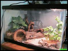 Leopard Gecko Terrarium by SizzyBubbles Leopard Gecko Cage, Leopard Gecko Terrarium, Lepord Gecko, Leopard Gecko Habitat, Snake Terrarium, Lizard Habitat, Reptile Habitat, Reptile Cage, Terrarium Ideas