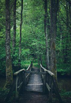 https://flic.kr/p/sy3DrF | Forest