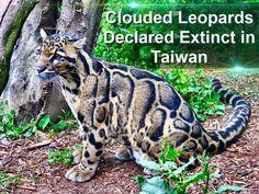 Another animal goes extinct
