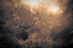 Bestiary Forest / Nicolas Le Boulanger | Photographie