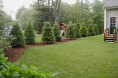 Large backyard landscaping ideas are quite many. However, for you to achieve the best landscaping for a large backyard you need to have a good design. Landscaping Along Fence, Landscaping Around Trees, Backyard Trees, Farmhouse Landscaping, Backyard Privacy, Landscaping With Rocks, Garden Trees, Backyard Landscaping, Luxury Landscaping