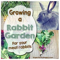 Growing a Rabbit Garden for Your Meat Rabbits. A great way to offer more natural feed and supplement what you're buying.