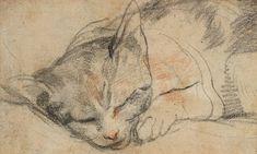Federico Barocci (Italia, 1535-1612). Detail from Study for a Cat. Galleria degli Uffizi.