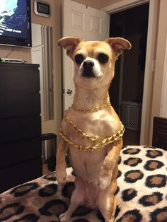Not sure why but whenever my dog wants something she stands up like this. #dogs #pets #dog #Adopt #love #cute #animals #puppy