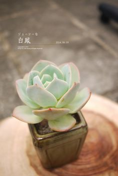 Succulent cjs <3 adorable