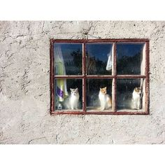 "cat-in-windows: ""via @richard_maler Instagram photo 