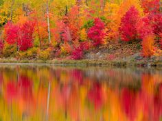 Autumn reflections in Gryphon Lake. Espanola, Ontario, Canada.