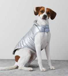 Silver American Beagle Outfitters Puffer Jacket for SCOUT Animals And Pets, Cute Animals, American Beagle, Dog Lady, Animal Fashion, Pet Fashion, Beagle Puppy, Pet Costumes, Crazy Dog