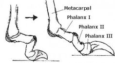 Como cortar as unhas do seu cão e por que as unhas do pé longos são prejudiciais para a saúde do seu cão