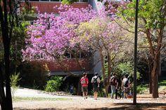 Estudantes. UPA (Universidade de Portas Abertas. Foto: Scarpinetti/Unicamp   Flickr - Photo Sharing!