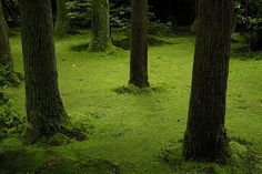 Ryoanji moss garden.jpg by Zenndott, via Flickr