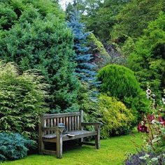 the garden: Conifer Gardens - lots of great conifer combinations