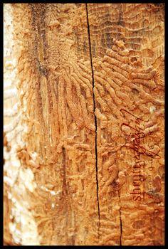 termites http://www.arrowservices.com/ http://www.skylinepest.com/