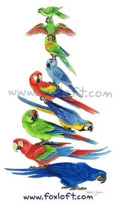 Macaw Stack! Prints available:  http://foxloft.com/image/macawstack