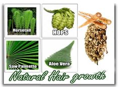 The hair is a symbol of beauty, status, and health. It is essential for you to take proper care of your health in order to stop early hair loss. Hair loss is a common concern these days for both males and females who are in their mid to late middle age. Herbs For Hair Growth, Quick Hair Growth, Hair Regrowth Tips, Hair Care Tips, Guava Benefits, Guava Leaves, Extreme Hair, Stop Hair Loss, Quick Hairstyles