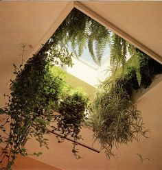 Bringing the outside in; roofgardens and a missing skylight. What a beautiful home-space.