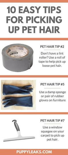 Does your dog shed everywhere? Here's 10 easy tips for picking up pet hair.