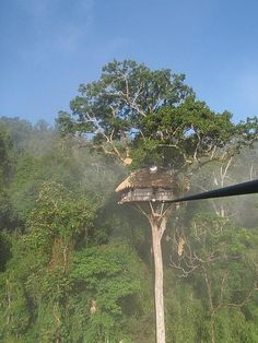 A true experience - Gibbon Experience  in Laos.         Living in a tree house, getting there on zip lines, watching monkeys in the morning.