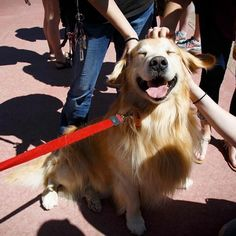 VIPs are on the #ColoradoState campus (Very Important Pups) for De-Stress with Dogs. If this doesn't get you motivated for finals, we don't know what will.