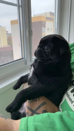 Baby Black Pug, Black Pug Puppies, Cute Dogs And Puppies, Baby Animals, Funny Animals, Cute Animals, Grumble Of Pugs, Baby Pugs, Pug Pictures