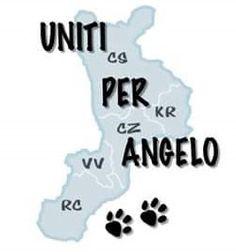 14 Best Cuccioli Images Ebay Journals Beagle