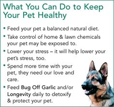 Check out Springtime Supplements right now and browse our large variety of garlic supplements for dogs, for example Bug Off Garlic for Dogs! Garlic For Dogs, Garlic Supplements, Pet Insurance Reviews, Bug Off, Dog Information, Healthy Pets, Flea And Tick, Insect Repellent, What You Can Do