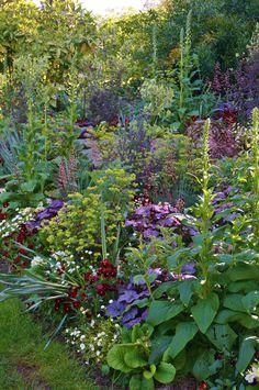 Digitalis, Viola, Bellis, Euphorbia, Heuchera - Another! Back Gardens, Outdoor Gardens, Landscape Design, Garden Design, The Secret Garden, Cottage Garden Plants, Heuchera, Garden Borders, Shade Garden