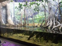 Shore Gallery-Mangrove Forest display