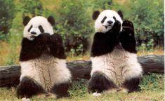 Jazz flute pandas