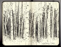 Silver birch sketchbook pages, sketchbook ideas, art sketches, pen sketch, Artist Journal, Artist Sketchbook, Sketchbook Pages, Sketchbook Ideas, Sketchbook Inspiration, Pen Art, Art Sketches, Pen Sketch, Collages