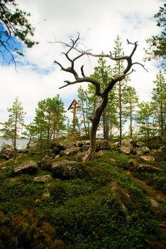 Panoramio - Photos by VoroninSV > Белое море
