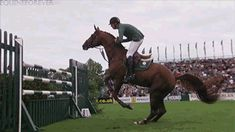 (10) horse gif | Tumblr A BROWN HORSE
