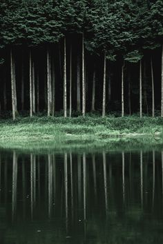 Zauberhaftes Naturbild.