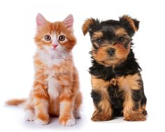 Ginger Kitten and Cute Puppy http://www.dividedback.com/
